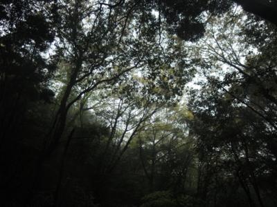 f:id:noronoyama:20121117142402j:image