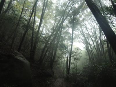 f:id:noronoyama:20121117142604j:image