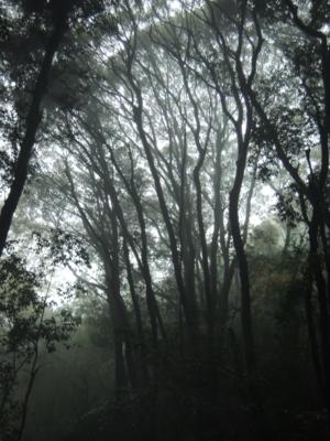 f:id:noronoyama:20121117142638j:image