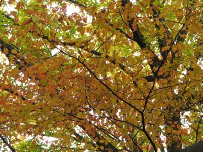 f:id:noronoyama:20121124124134j:image