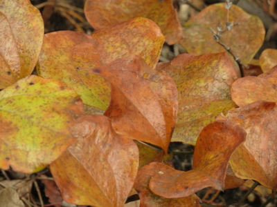 f:id:noronoyama:20121124125528j:image