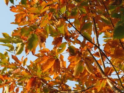 f:id:noronoyama:20121124155830j:image