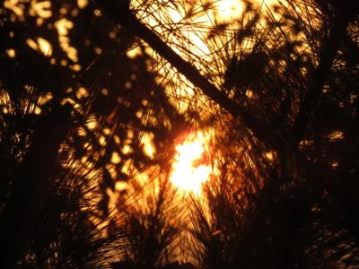 f:id:noronoyama:20121124163130j:image