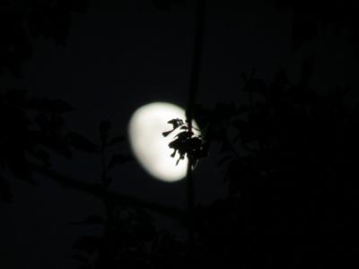 f:id:noronoyama:20121124170730j:image