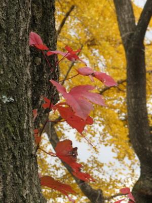 f:id:noronoyama:20121201100728j:image