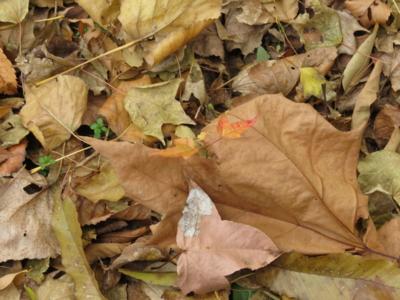 f:id:noronoyama:20121201104331j:image
