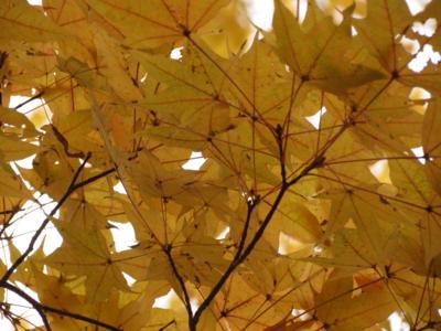 f:id:noronoyama:20121201110924j:image