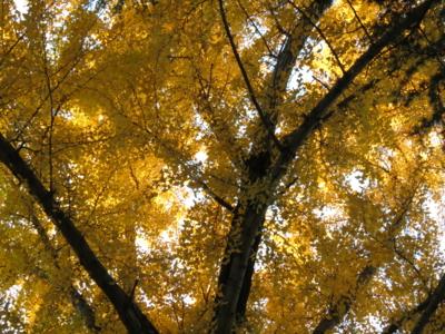 f:id:noronoyama:20121201160444j:image