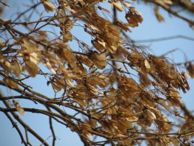 f:id:noronoyama:20121208105207j:image