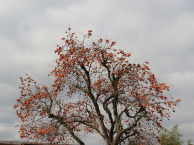 f:id:noronoyama:20121216111026j:image