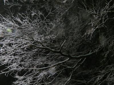 f:id:noronoyama:20121219004520j:image