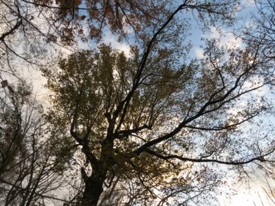f:id:noronoyama:20121224161343j:image