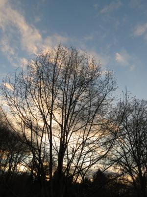 f:id:noronoyama:20121224162115j:image