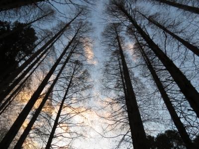 f:id:noronoyama:20121224162525j:image