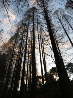 f:id:noronoyama:20121224162616j:image