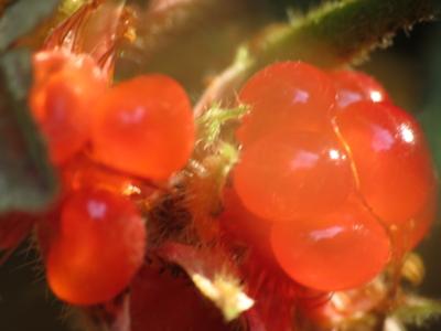f:id:noronoyama:20121231122533j:image