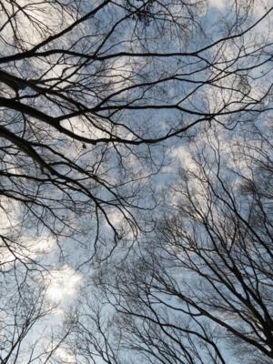 f:id:noronoyama:20130102144951j:image