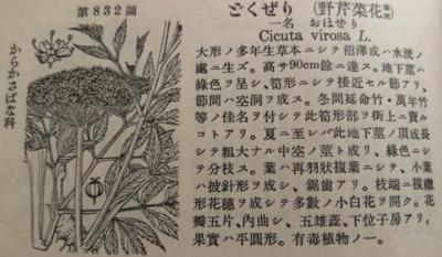 f:id:noronoyama:20130105224338j:image