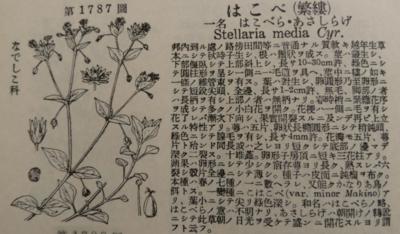 f:id:noronoyama:20130106181804j:image