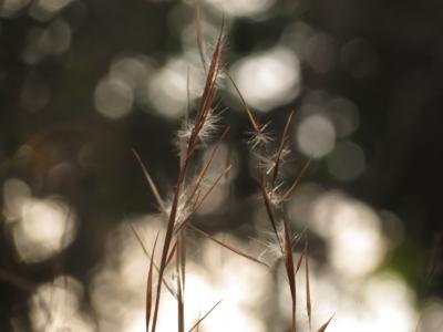 f:id:noronoyama:20130210155923j:image
