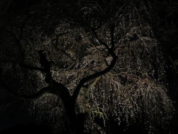 f:id:noronoyama:20130330202354j:image