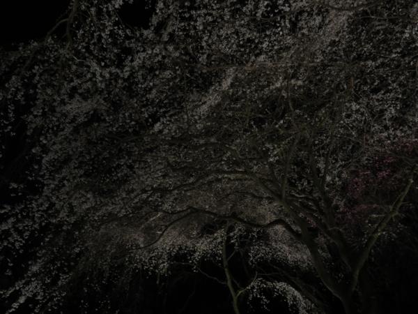 f:id:noronoyama:20130330202444j:image