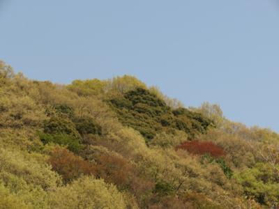 f:id:noronoyama:20130413135508j:image
