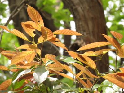 f:id:noronoyama:20130414120105j:image