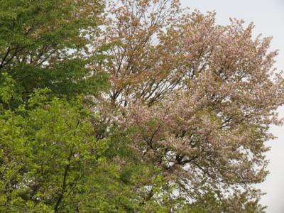 f:id:noronoyama:20130420110302j:image