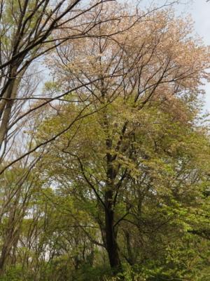 f:id:noronoyama:20130420112616j:image