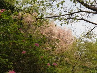 f:id:noronoyama:20130420113042j:image