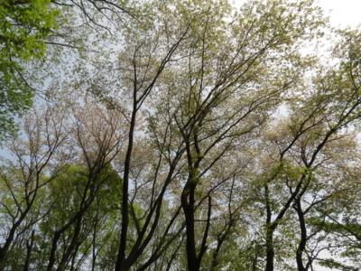 f:id:noronoyama:20130420113247j:image