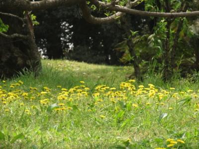 f:id:noronoyama:20130420115321j:image
