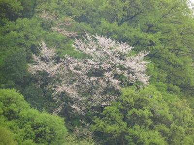 f:id:noronoyama:20130421072947j:image