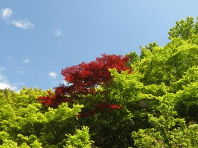 f:id:noronoyama:20130501122657j:image
