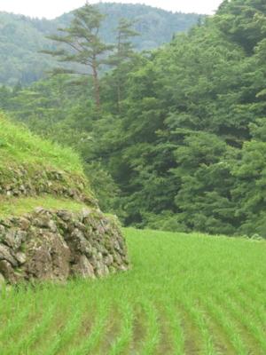 f:id:noronoyama:20130623071048j:image