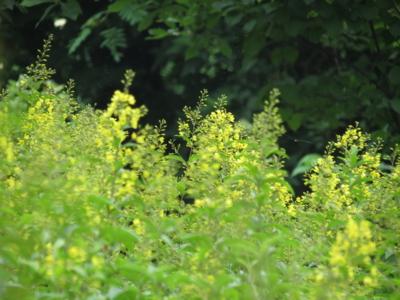 f:id:noronoyama:20130713101506j:image