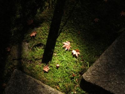 f:id:noronoyama:20131122112403j:image
