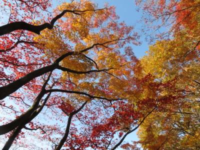 f:id:noronoyama:20131130150235j:image