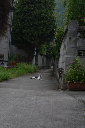 f:id:noronoyama:20140824063013j:image