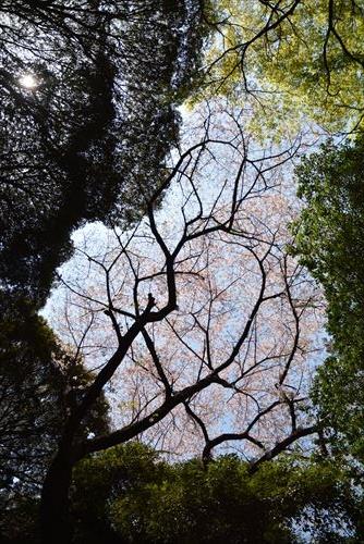 山桜のステンドグラス