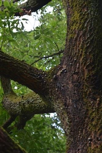 樹液に集まる:20170716081341j:私市植物園