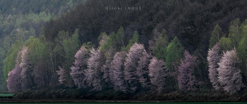 f:id:northern-island-colors:20160618115655j:plain