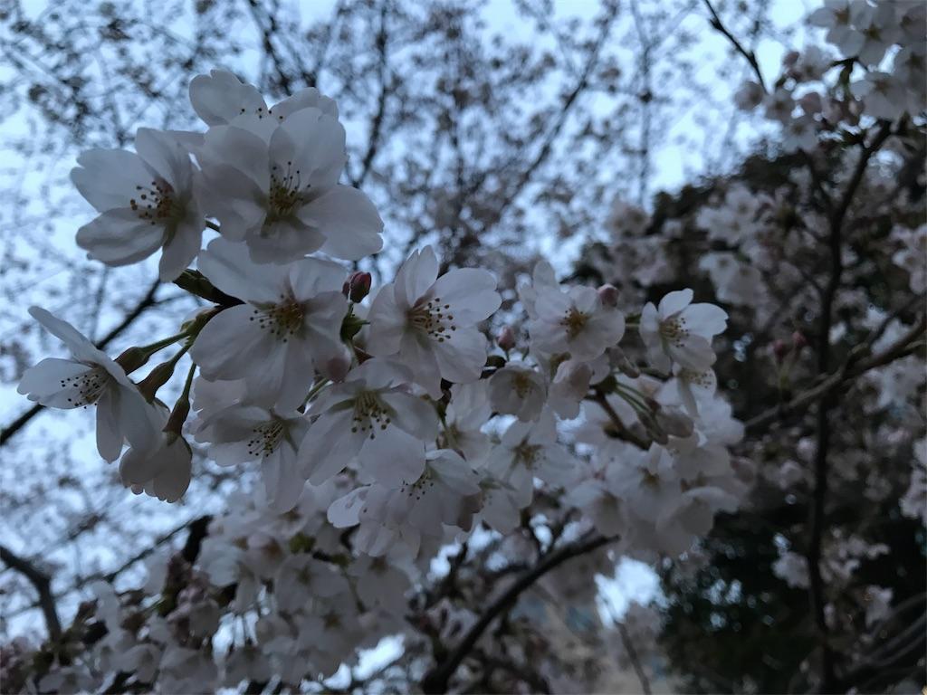 f:id:northern_sunny_sky:20180324231144j:image