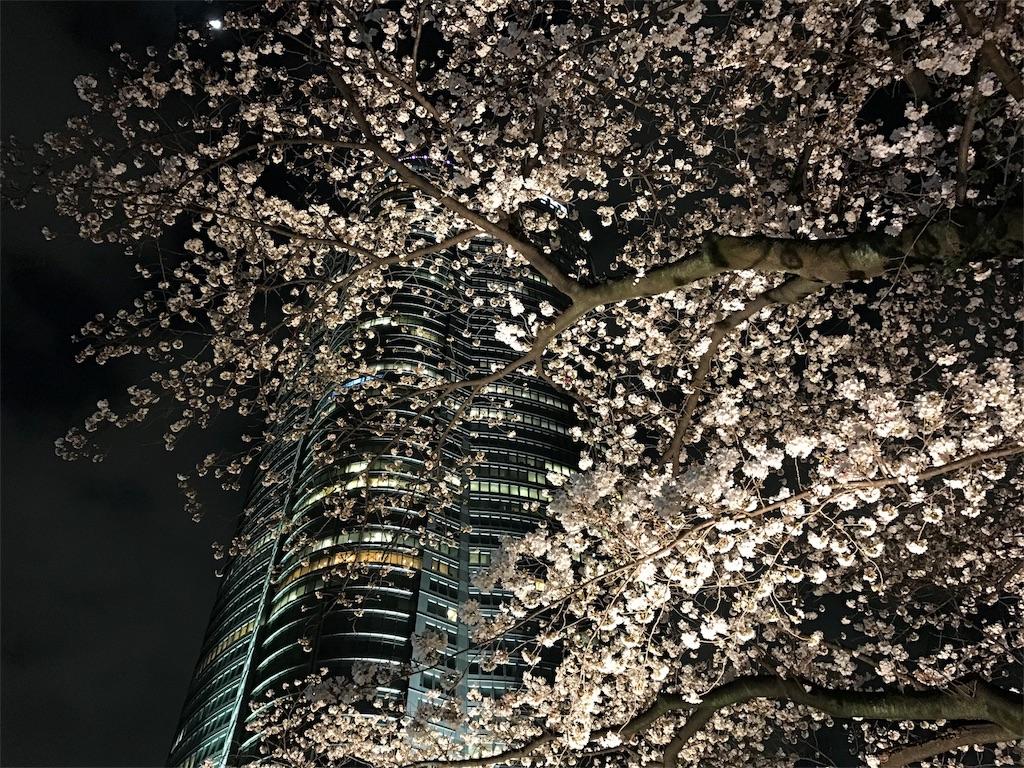 f:id:northern_sunny_sky:20180326204527j:image