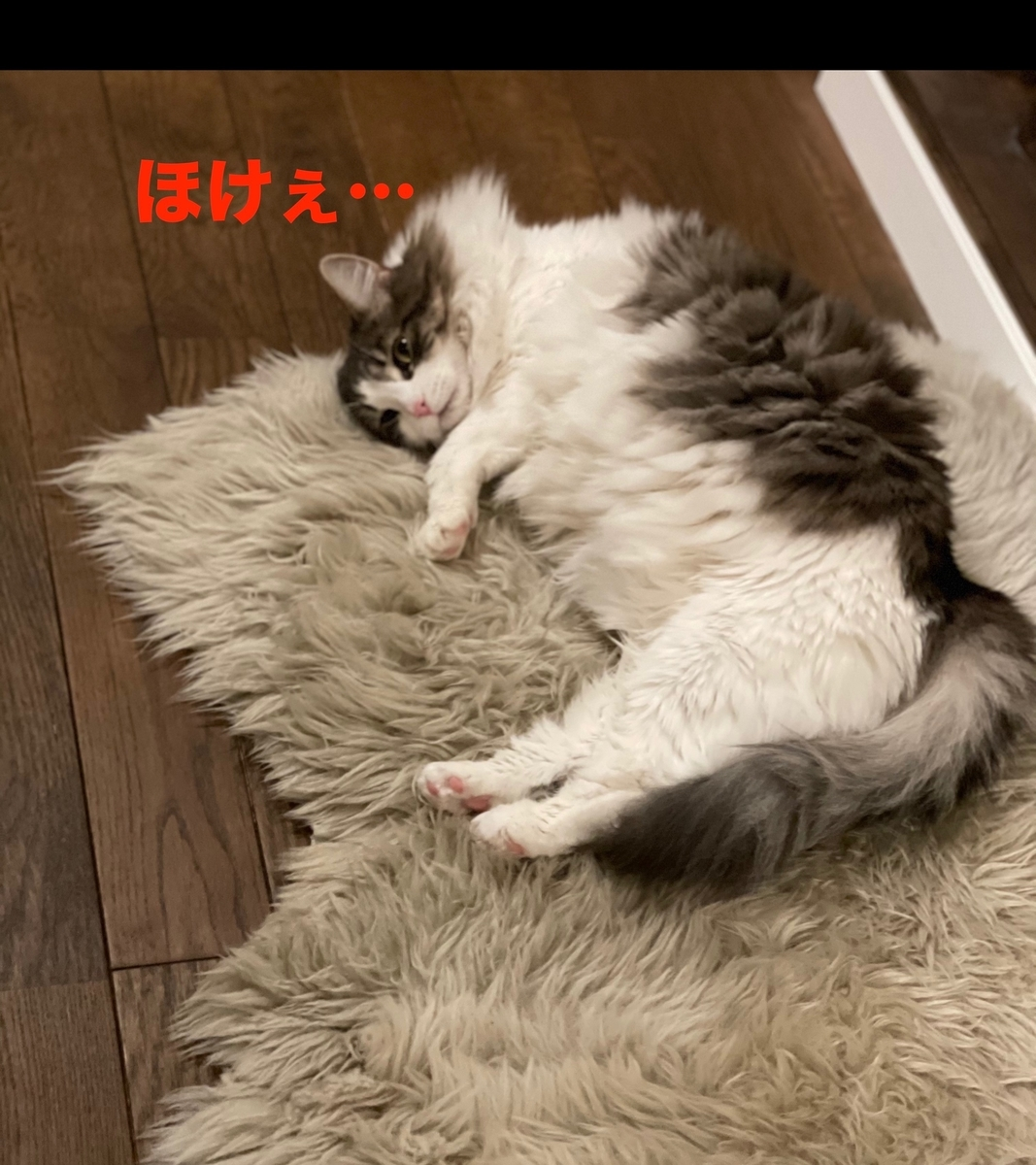 f:id:noru-minineko:20210504212410j:plain