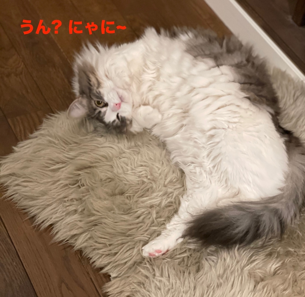 f:id:noru-minineko:20210504212630j:plain