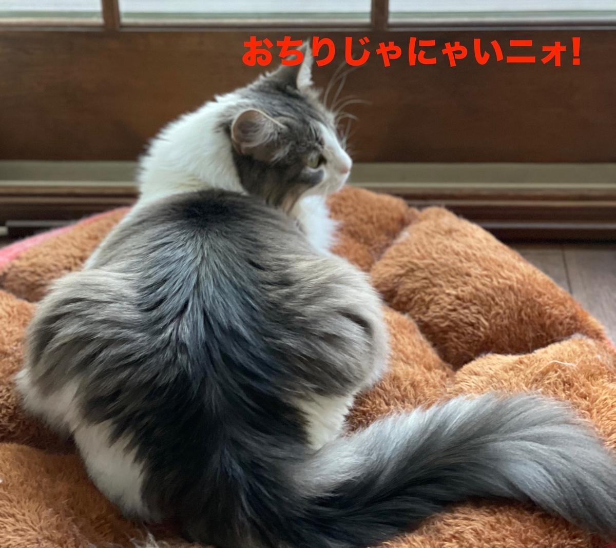 f:id:noru-minineko:20210506211427j:plain