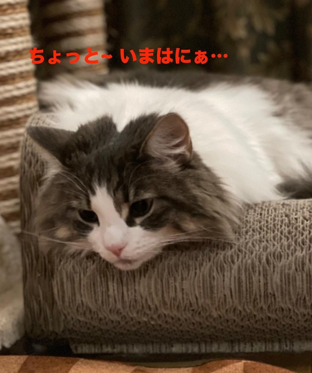 f:id:noru-minineko:20210508210642j:plain