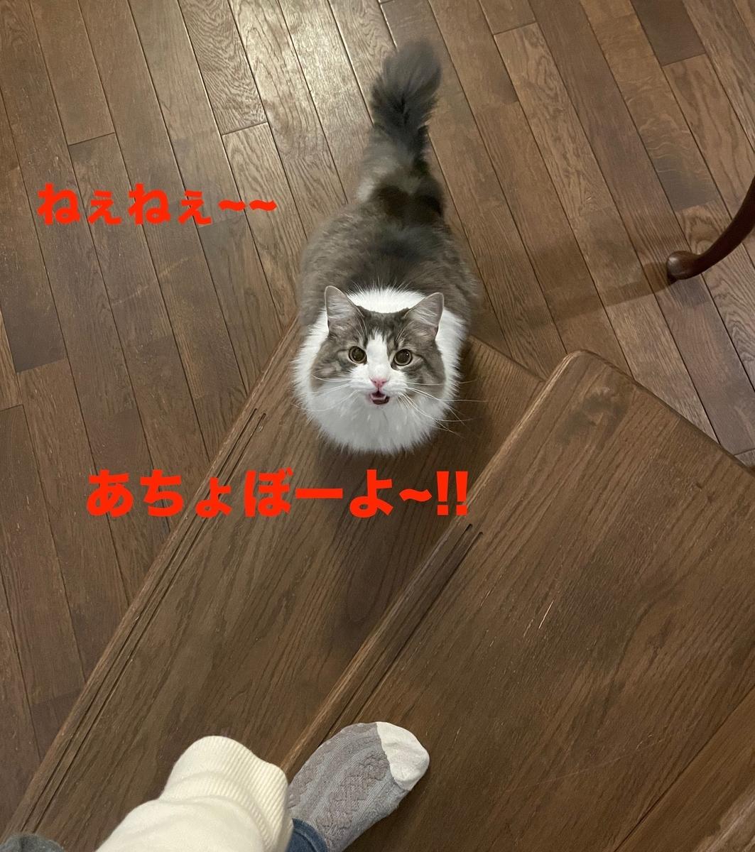 f:id:noru-minineko:20210508213724j:plain